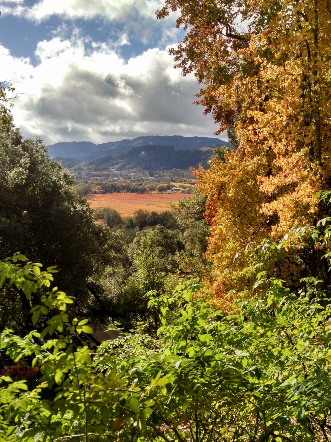 Rombauer view 2