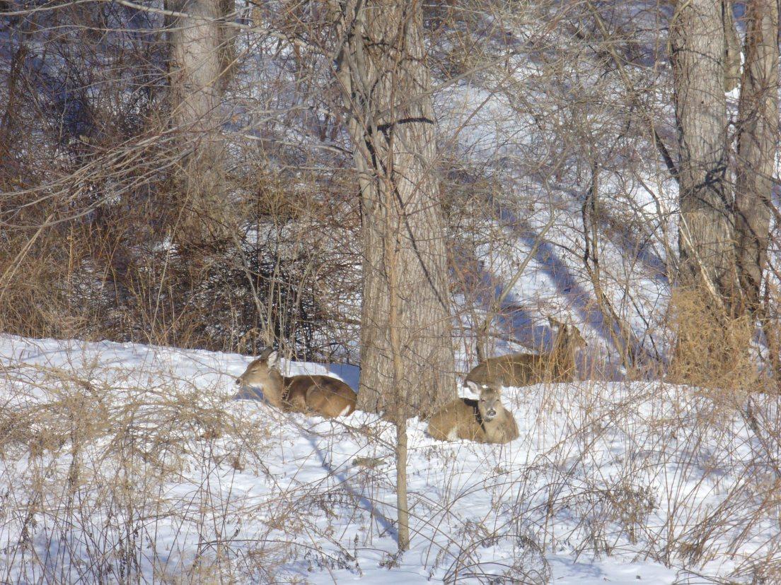 deer-002